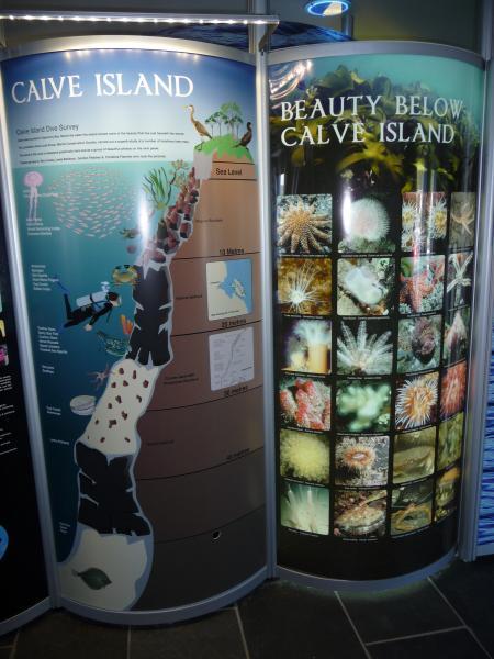 Marine life around Calve Island, Tobermory, by MCS Lancashire